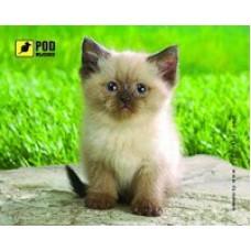 """Килимок Podmyshku, із зображенням """"Сиамский котик"""" 240x190x1.4 мм, ПВХ"""